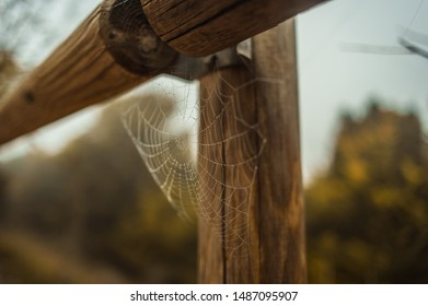Spider web on wooden stick