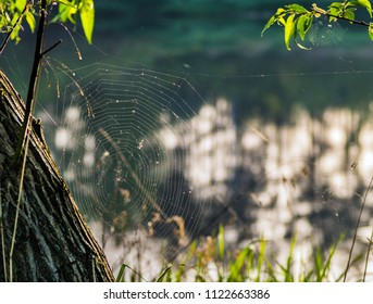 spider web over water