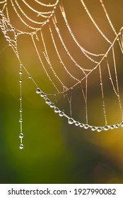 Spider web, plants and dew drops close-up. Natural pattern. Golden background. Soft sunlight. Macrophotography, graphic resources, insects, environmental conservation. Panoramic view, copy space