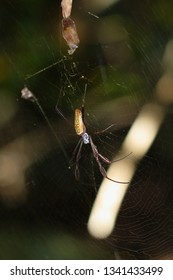 Spider in a web in rainforest