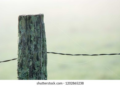 A spider web is seen on a fencpost