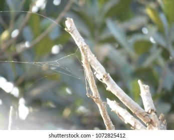 Spider web shot.