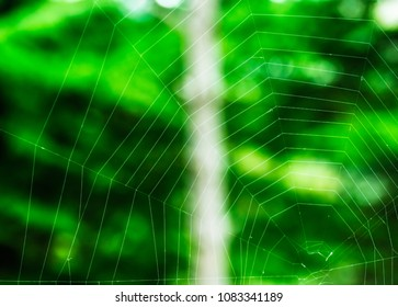 Spider web spread on a tree, made up of perfectly shaped hexagon patterns