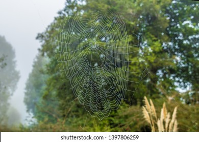 Spider web with trees in the background