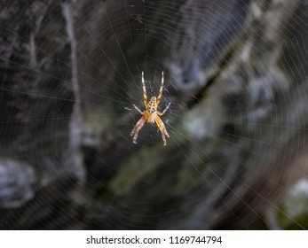 Spider and its spider web waiting for a prey