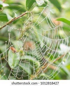 Spider web with water drops. Green leaf at the background.