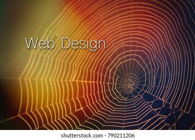 Spider Web Website Design Colorful Light Blurs with Lettering Typography.