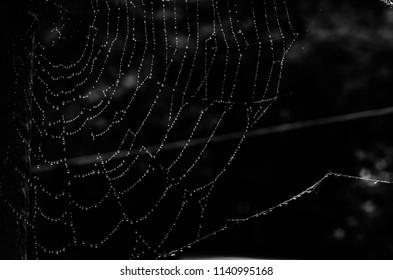 spider web,beautiful background