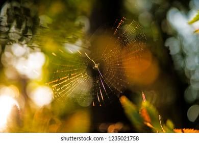 spider webs in back light