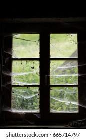 spider webs window