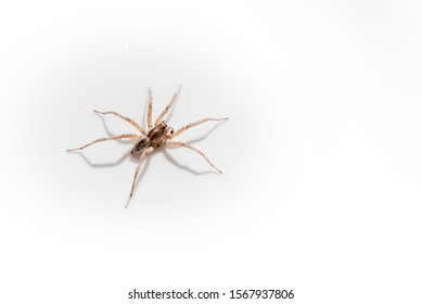 Spider with white background for editing