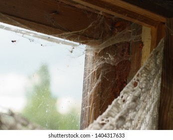 Spider wove a web on the old window frame on the russian dacha. Here no one has cleaned for a long time.