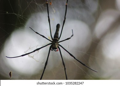 spider yellow in florest