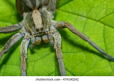 Spider,Insects,Spider on leaves.