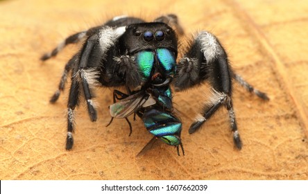 Spiders are air-breathing arthropods that have eight legs. Unlike insects, spiders do not have antennae.  Spider eat insects.