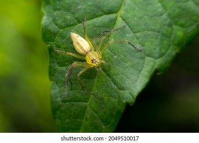 Spiders are classified as arthropods. Or arthopods, as well as insects, millipedes, crabs, etc., are classified as Araneae, with different shapes, styles and sizes.