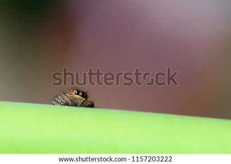 Spiders Hiding Prevent Bait Seeing Waiting Stock Photo (Edit Now