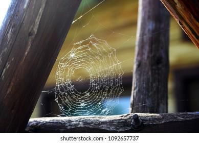 spiders web between wood