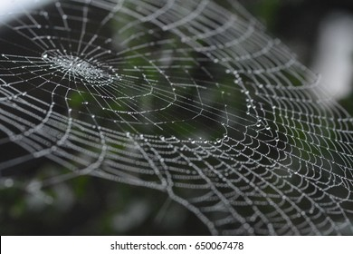 A spider's web or cobweb covered in tiny water, dew or rain droplets