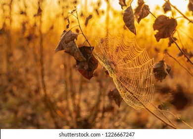 Spider's web with dew drops in the sunrise of an autumn day