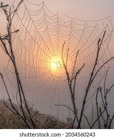 A spider's web in the fog as a harbinger of autumn