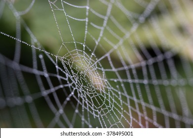 a spiders web in morning dew