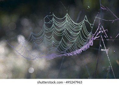 Spiders web on a autumn morning lit by the sun, shining like pearls or diamonds, background is blurred