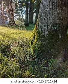 Spiders web on mossy tree
