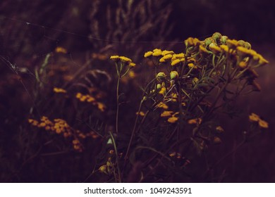 A spider's web on the wild yellow flower