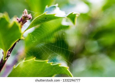 spiderweb among the green leaves of the bush