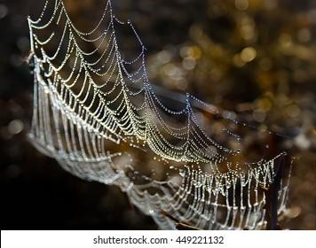 spiderweb blue dew drops