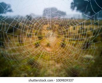 spiderweb, cobweb