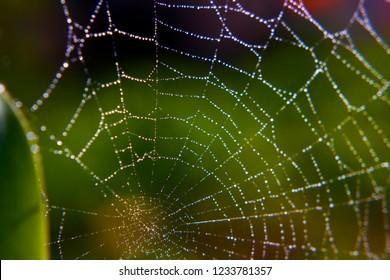 spiderweb dew drops shimmer in the sun macro shot