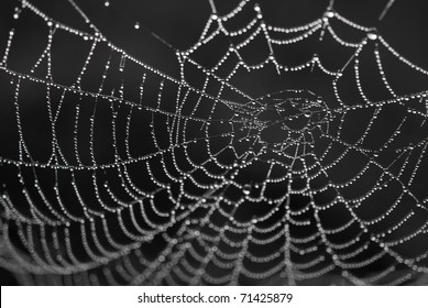 spiderweb with dewdrops