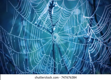 Spiderweb with drops of dew on a blue background