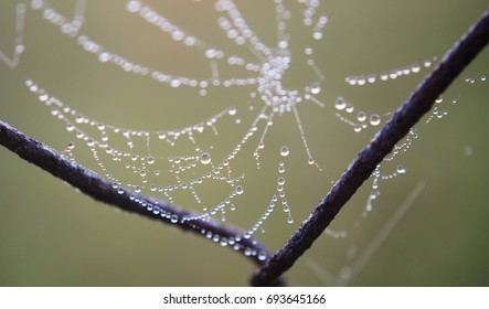 Spiderweb in the early morning on a rustic wire