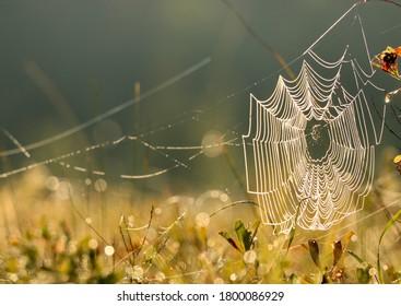 Spiderweb in a field at sunrise.