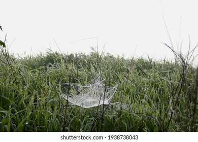 A spiderweb full of morning dew in a meadow.