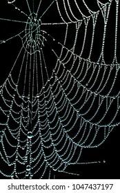 Spiderweb with morning dew in dramatic contrasted light with black background near Lake Matheson, New Zealand.