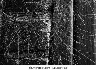 Spiderweb on black wall