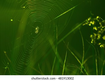 Spiderweb on a meadow in the sunshine.