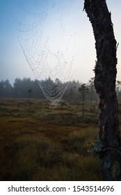 Spiderweb on tree with dark forest in background vertical