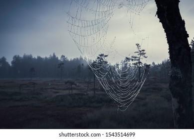 Spiderweb on tree with dark forest in background horizontal