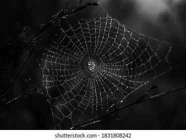 Spiderweb with water drops in a black background