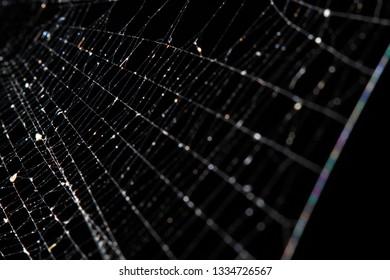 Spiderwebs on dark background