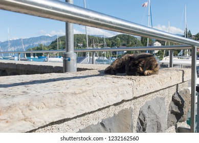 Spiez/Switzerland - August 25 2015: Lazy cat at Seegarten Marina in Spiez. Spiez is a town and municipality on the shore of Lake Thun in the Bernese Oberland region of the Swiss canton of Bern.