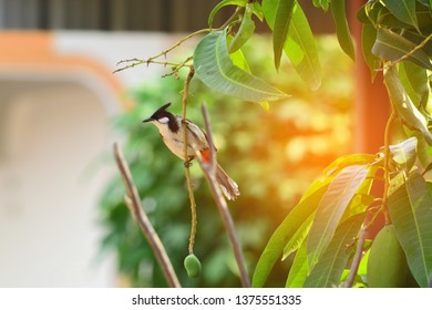 spigot birds are perched on natural branches