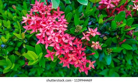 Pink spike flower images stock photos vectors shutterstock spike pink flower mightylinksfo