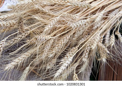 Spikelets of golden wheat