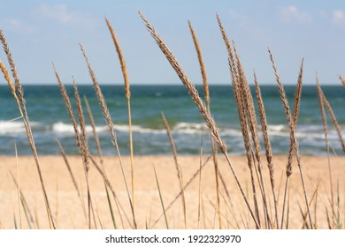 Spikelets and grass on a blurred background of a sandy beach and a blue sea.